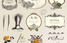 Vintage Vector Nature & Food Design Elements