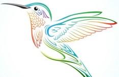 Colorful Hummingbird Vector