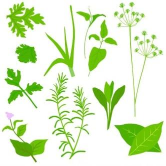 Collection Of Green Herbals Vector 01