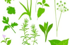 Collection Of Green Herbals Vector 01