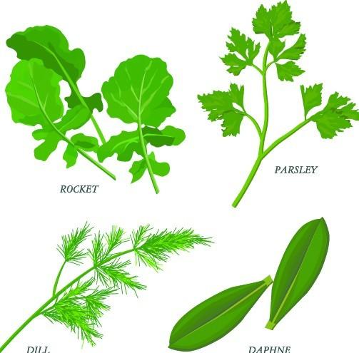 Collection Of Green Herbals Vector 02