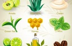 Set Of Vector Natural Cosmetics