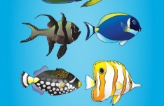 7 Vector Illustrations of Tropical Fishes