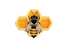 Vector Illustration Of Bee and Honeycomb