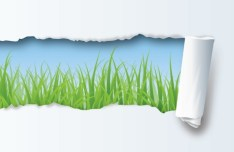 Paper Tear Green Grass Vector