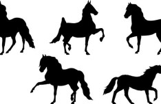 Set Of American Saddlebred Silhouettes Vector