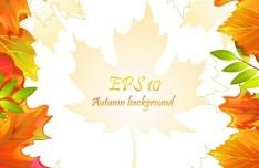 Autumn Yellow Maple Leaf Design Vector 05