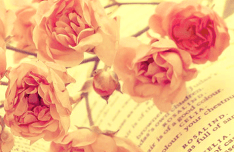 Rose Book Background PSD