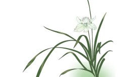 Green Orchid Vector Illustration