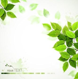 Summer Green Leaves 2015