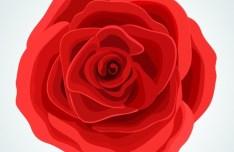 Red Rose Flower Vector Illustration