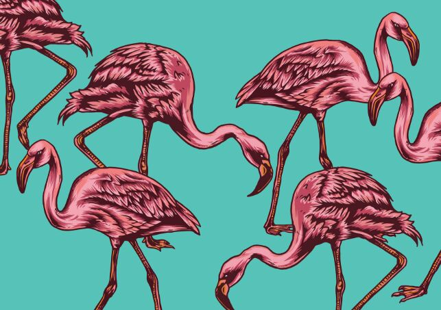 Flamingo Vector Set