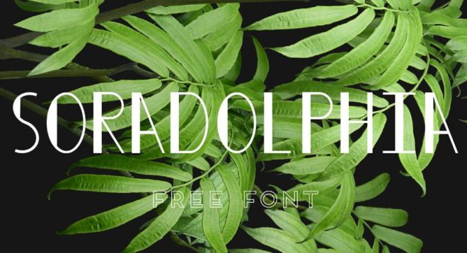 Soradolphia Display Font
