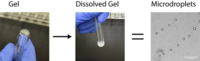 Figure 3. Alpha-hydroxy acid monomers are dried, resulting in the synthesis of a polyester gel. This gel is then rehydrated, resulting in the assembly of microdroplets.