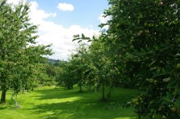 Take a wonder around he orchard