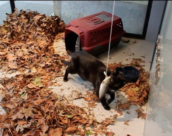 Carolee Schneeman, Utterly Precarious (cat party), Slought Foundation, 2012