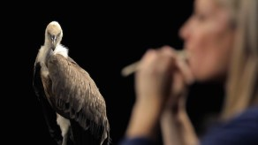 Allora & Calzadilla, Raptor's Rapture (still), 2012. HD video. Color, sound. 23:30 minutes. Courtesy of the artists.