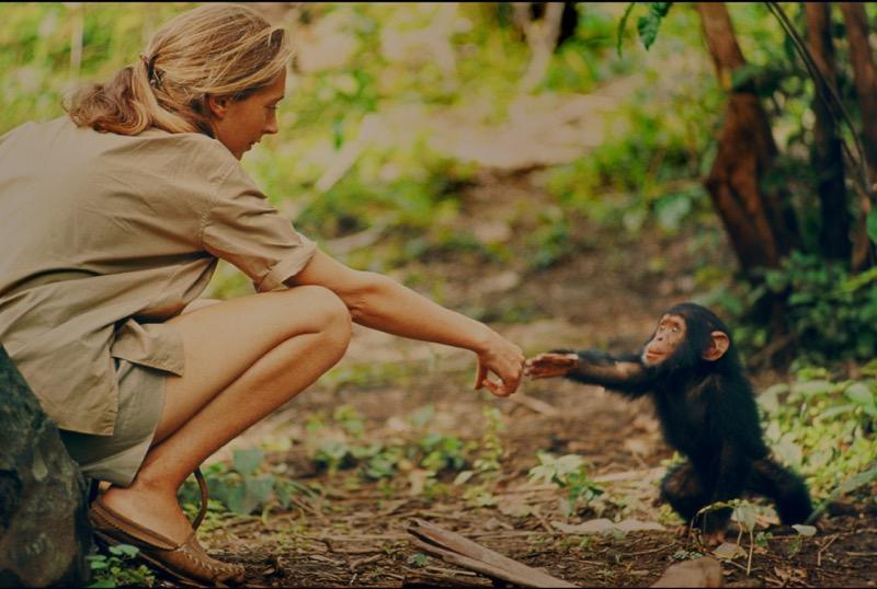 JANE documentario National Geographic