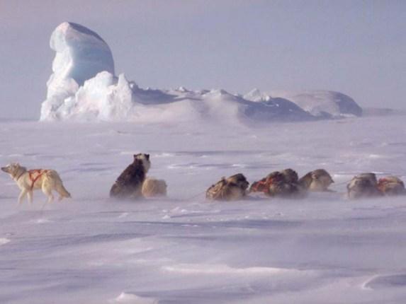 Tempête de Neige - Arctique