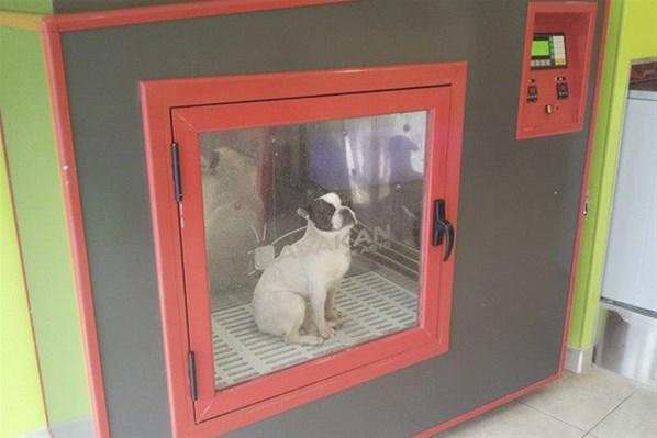 dog wash un douche en libre service pour chiens. Black Bedroom Furniture Sets. Home Design Ideas