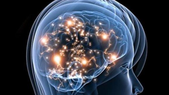 cerveau-femme