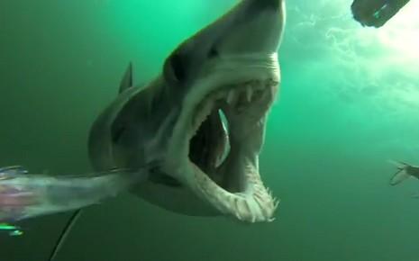 7763043656_le-requin-mako-filme-le-4-juillet-dernier-sur-la-cote-est-des-etats-unis