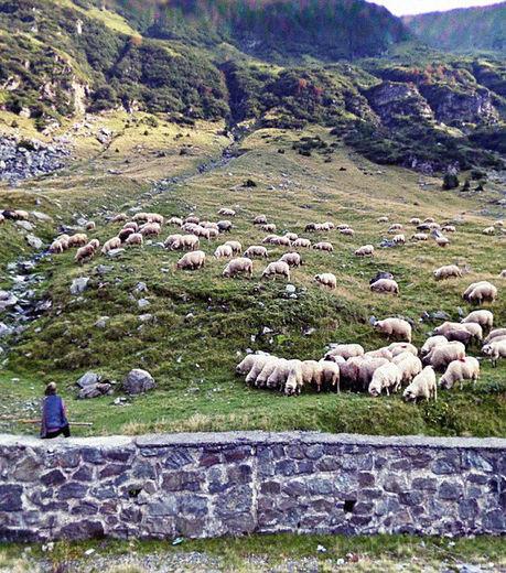 google-maps-seule-avec-son-baton-elle-observe-le-silence-des-agneaux_129624_w460