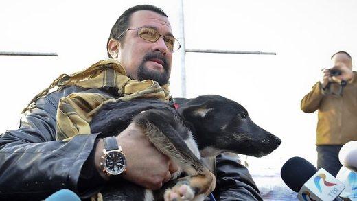 Acteur Steven Seagal détient Grivei, un chien errant qu'il a adopté à l'abri de chien Dogtown dans Uzunu, Roumanie