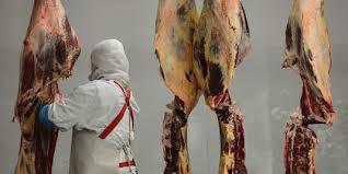 trafic de viande de cheval