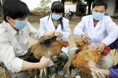 la grippe aviaire a affecté 99 personnes