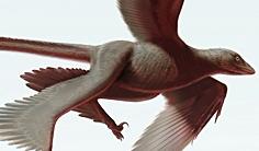 La découverte du Changyuraptor yangi