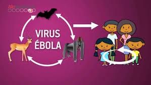 Le virus Marburg fonctionne comme l'Ebola