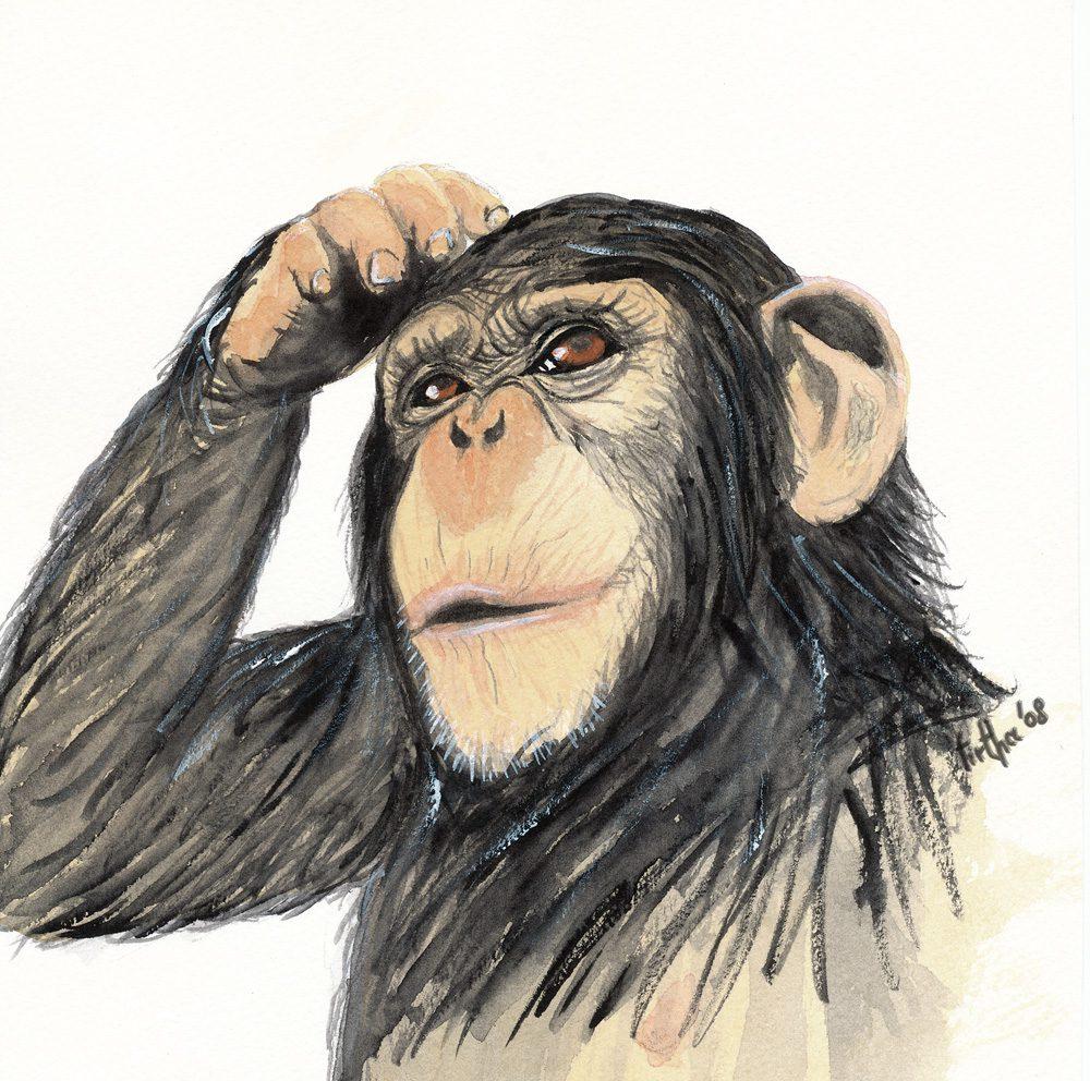 Scimpanzè, acquerelli schmincke horadam su carta acquerello, senza disegno preliminare
