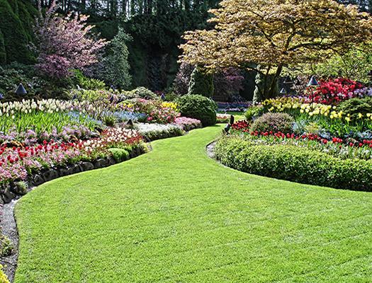lawn installation & repair maintenance