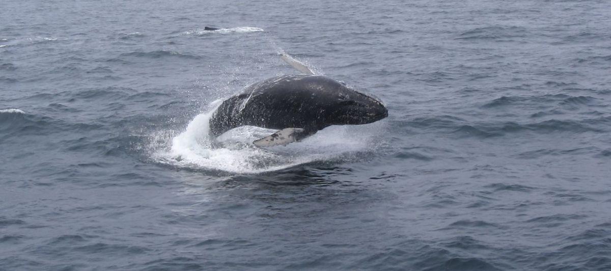 interview met dailybits walvis spotten