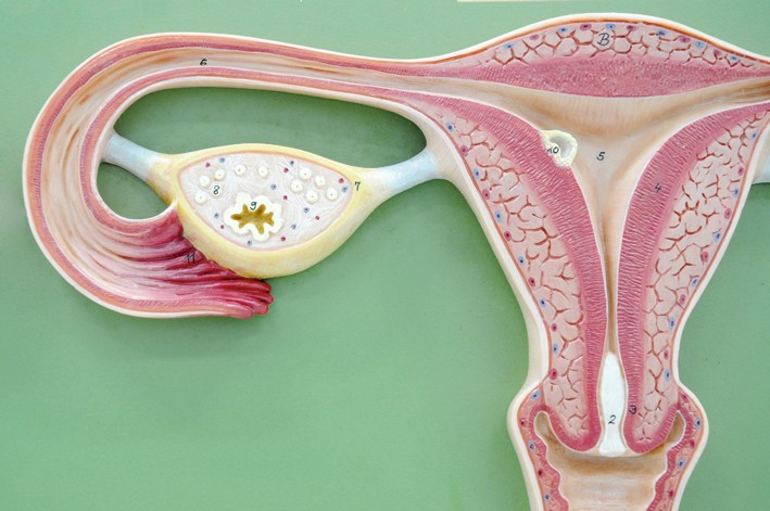 Siddha Medicine for PCOS (Polycystic Ovary Syndrome)  | TKN Siddha