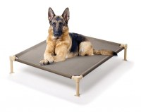 5 Best Elevated Pet Bed  Provide all year round comfort ...