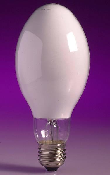 Mercury Fluorescent Light Bulbs