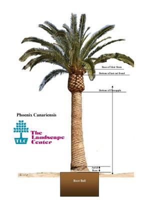 Palm Trees | Relocation & Preservation