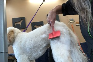 What Brush to Use and How to use it with TLC Dog Grooming