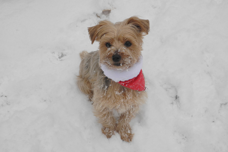 Lady Bug Playing in the Snow at TLC Dog Grooming