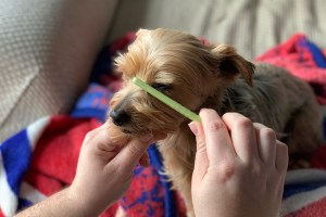Combing the area around your dogs eyes with TLC Dog Grooming
