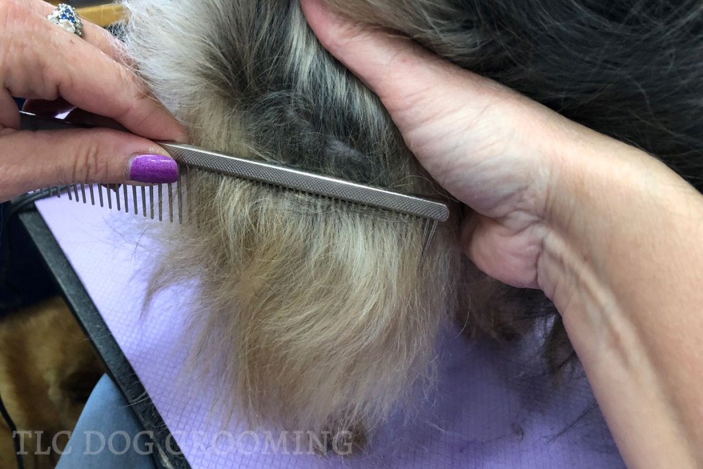 Line Combing Your Double Coated Breed
