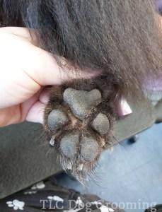 Slipper feet trimmed up on a black dog
