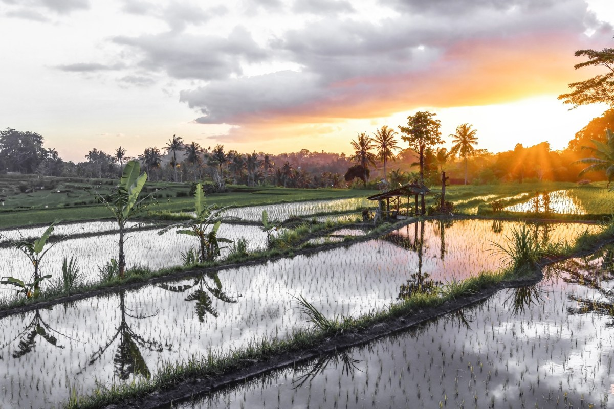 Bali Rice Fields Troy Lyndon Massey