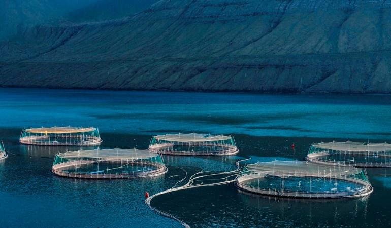 Faroe Islands Seafood Salmon Farms picture by Haarlaa Hamilton, courtesy Visit Faroe Island Meetings