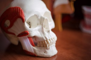 What is TMJ or the Temporomandibular Joint?