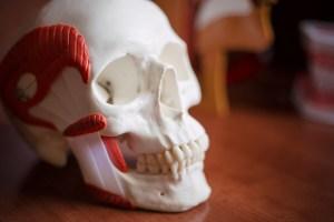 What is TMJ or the Temporomandibular Joint?