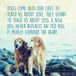 """""""Dogs come into our lives to teach us about love. They depart to teach us about loss. A new dog never replaces an old dog, it merely expands the heart."""""""