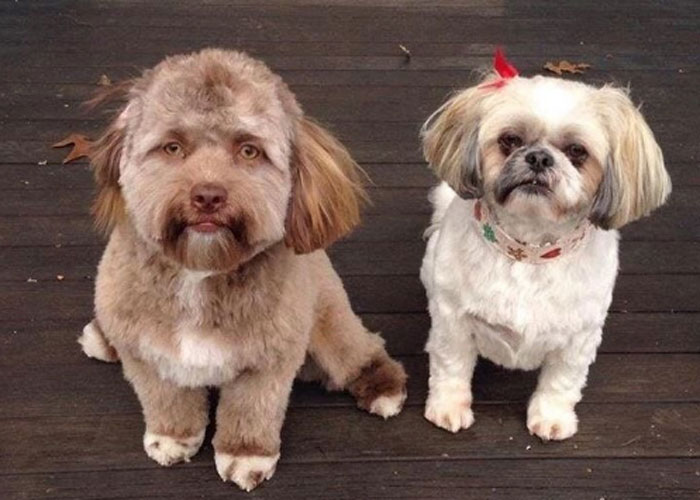 facebook, perro, rostro humano,